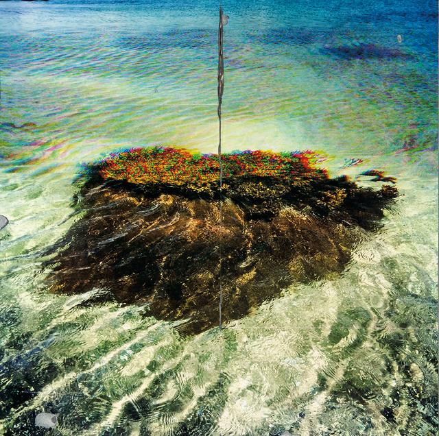 , 'CMYK Seaweed,' , Dowling Walsh