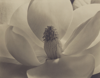 Imogen Cunningham, 'Magnolia Blossom,' 1925, Phillips: The Odyssey of Collecting