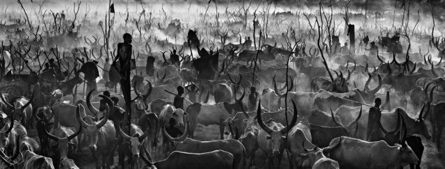 David Yarrow, 'Mankind II (Black and White)', 2015, Hilton Asmus
