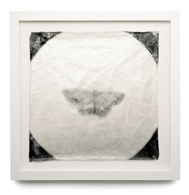 Doug & Mike Starn, 'Attracted to Light - B', 1996-2000, HackelBury Fine Art