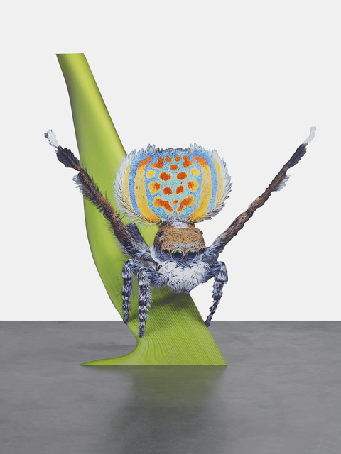 Katja Novitskova, 'Approximation (peacock spider)', 2015, Photography, Digital print on aluminum, cutout display, The Museum of Modern Art