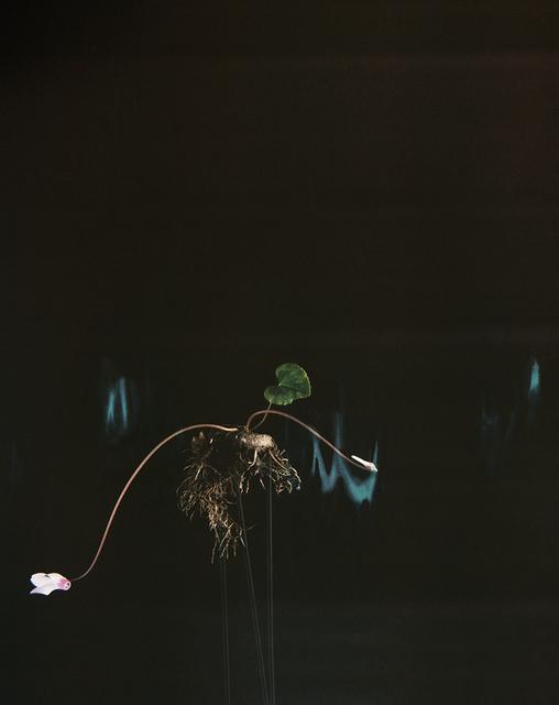 , 'Black Cyclamen P01,' 2018, Talley Dunn Gallery