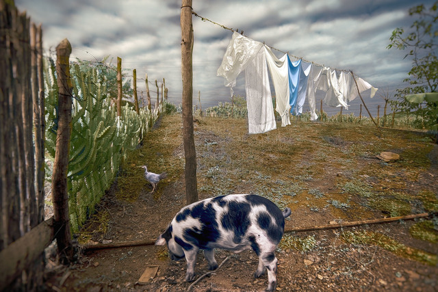 E.K. Waller, 'Pig on Clothesline', 2013, The Perfect Exposure Gallery