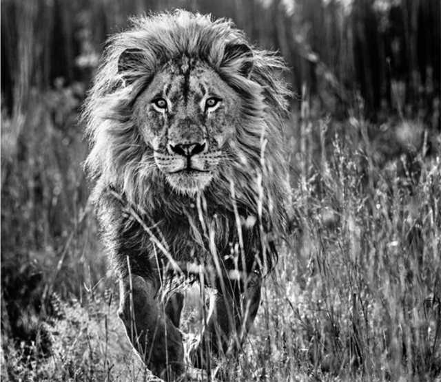 David Yarrow, 'The Full Nine Yards', Visions West Contemporary