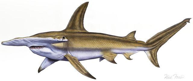 , 'Hammerhead Shark,' 2017, Quidley & Company