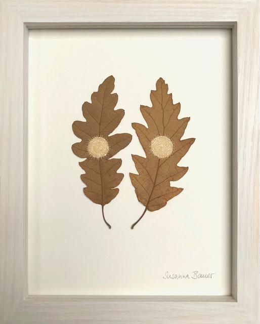 Susanna Bauer, 'Oak circles', 2019, Muriel Guépin Gallery