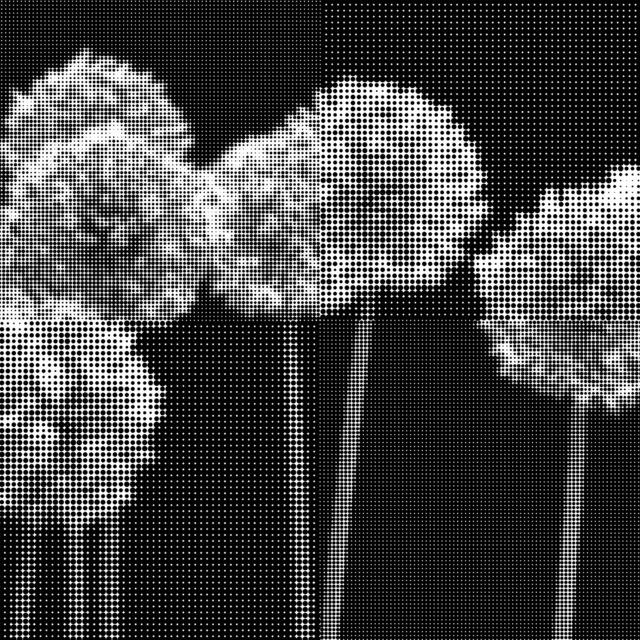 ", 'Untitled ""Allium"",' , THE WHITE ROOM GALLERY"