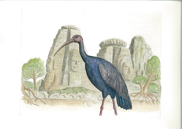 , 'Giant Ibis, Cambodia,' 2016, Cavalier Galleries