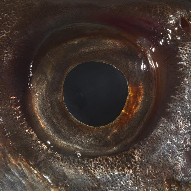 , 'Eye,' 2016, Federico Luger (FL GALLERY)