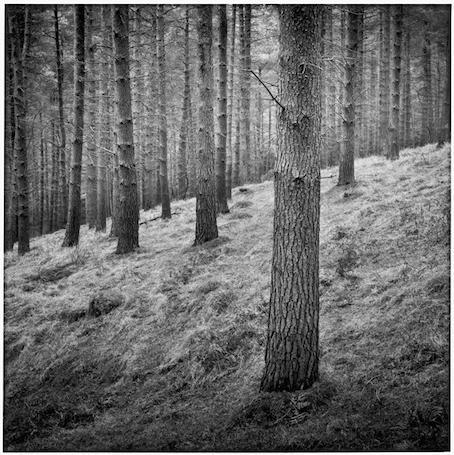 Paul Hart, 'Camphor', 2006, The Photographers' Gallery   Print Sales