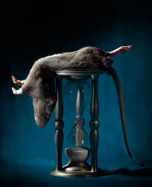 , 'Rat and Hourglass,' 2013, Galerie SOON