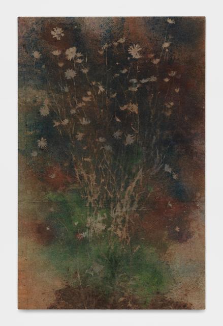, 'Untitled (Bovina, N.Y., daisies 2),' 2017, Galerie Eva Presenhuber