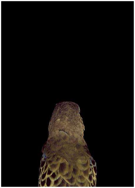 , 'Bad Bird #6,' , .M Contemporary