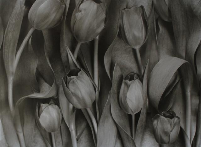 , 'Tulipa 3,' 1994, James Hyman Gallery
