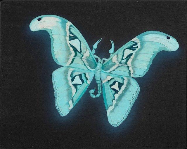 Tiffany Bozic, 'Glowing Atlas Moth', 2018, Beinart Gallery