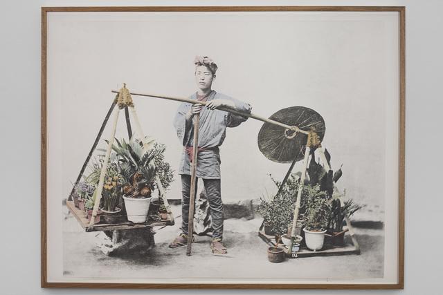 , 'Untitled (Cycas),' 2018, Vistamare/Vistamarestudio