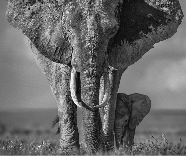 David Yarrow, 'The Walk Of Life', 2018, Photography, Archival ink on paper, Fineart Oslo