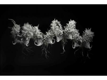 , 'BREATH,' 2011, Yodo Gallery