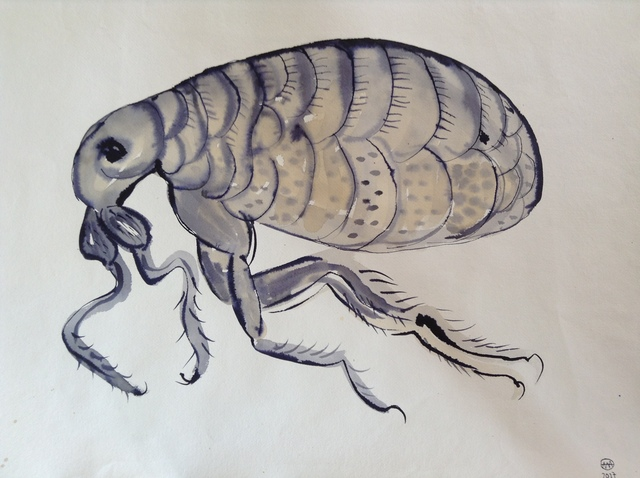 ", '""Fleas"" diptych, after Robert Hooke,' , Roza Azora"
