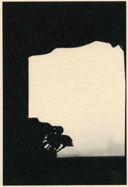 , 'Flower Arrangement,' , Soho Photo Gallery