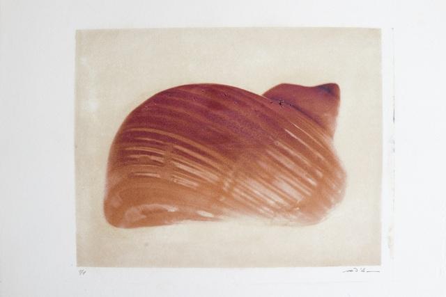 Marco D'Anna, 'Malta, shell', 2005, Buchmann Galerie Lugano