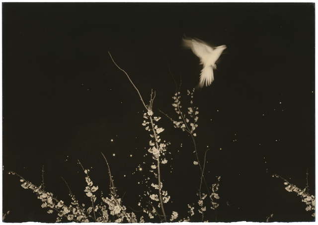 , 'Untitled #1154,' 2002, Yancey Richardson Gallery