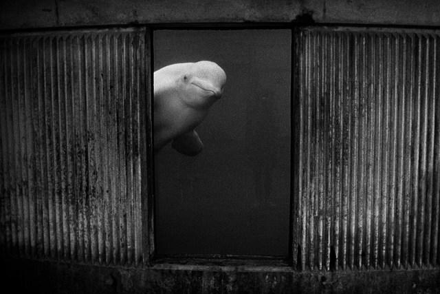, 'Silent Whale,' 1995, Bluerider ART