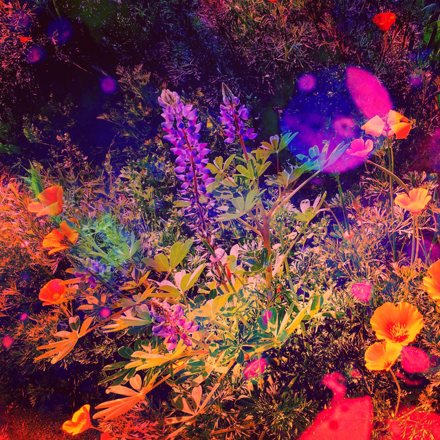 , 'Land of Poppies,' 2017, Open Mind Art Space
