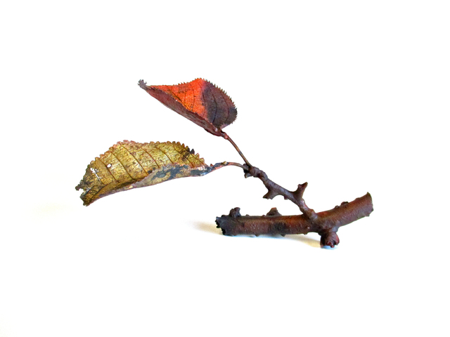 , 'Cherry Red Leaf,' 2017, Ippodo Gallery