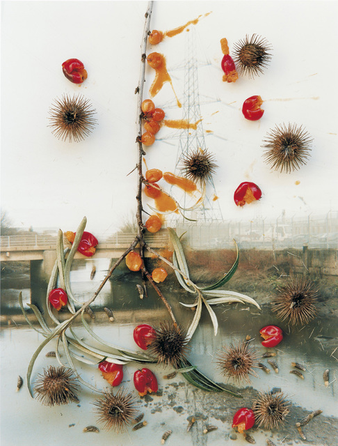 , 'Untitled, from the series 'Hackney Flowers',' 2005, Christophe Guye Galerie