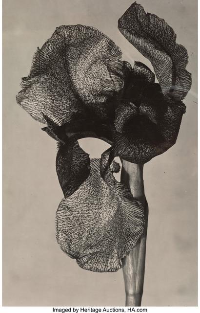 Emmanuel Sougez, 'Iris', circa 1930, Heritage Auctions