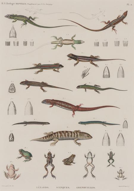 Unknown Artist, 'REPTILES: LÉZARDS, SCINQUES, GRENOUILLES', Doyle
