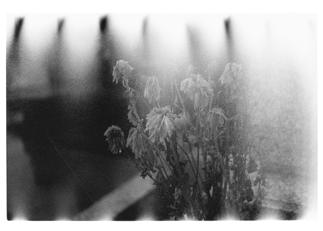 , 'Nude / A Room / Flowers #153,' 2012, Akio Nagasawa Gallery