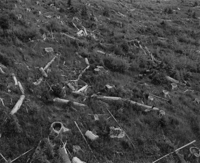 , 'Aerial View: herd of elk in old clearcut, 12 miles West of Mount St. Helens,' 1981, Etherton Gallery