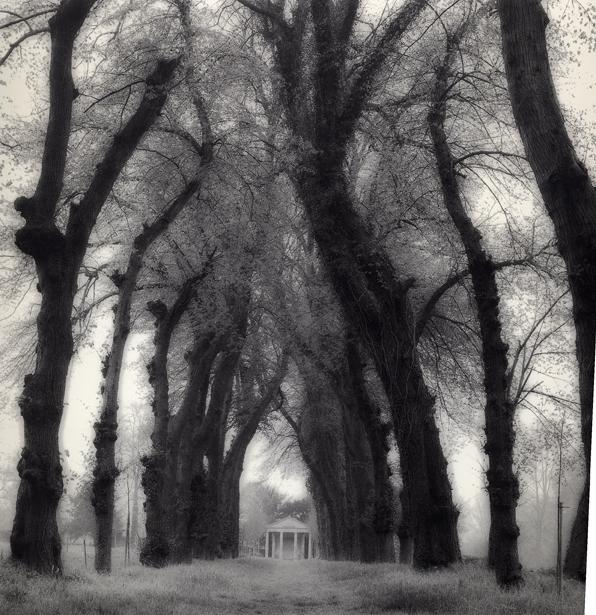 Lynn Geesaman, 'Parc de Canon, France (6-95-72-8)', 1995, Yancey Richardson Gallery