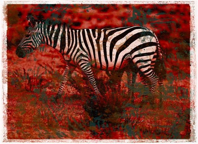 , 'Red Zebra,' 2018, Isabella Garrucho Fine Art
