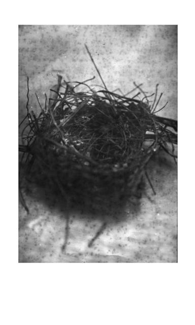, 'Sem título, da série Cura Áspera,' 2016, Galeria Mezanino