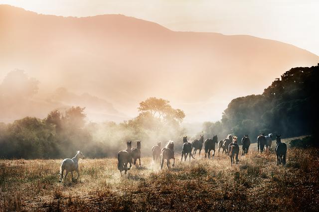 David Drebin, 'Horses In Paradise', 2014, Atlas Gallery