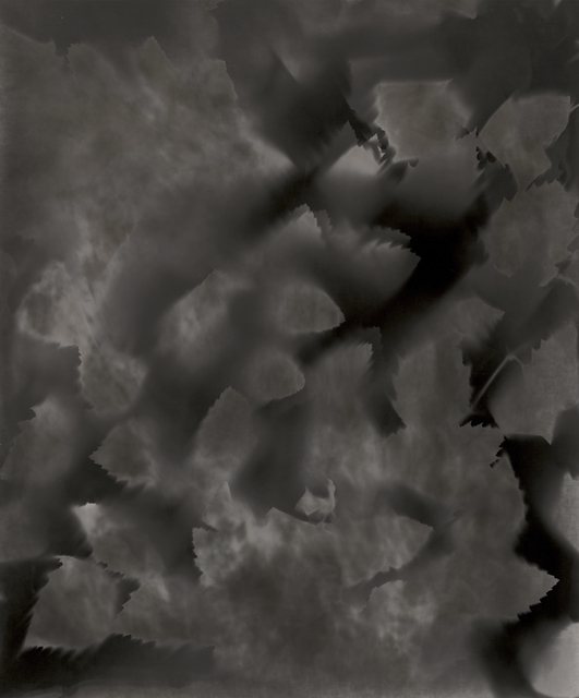Ray K. Metzker, 'Unique Photogram of Leaves', 2007, Contemporary Works/Vintage Works