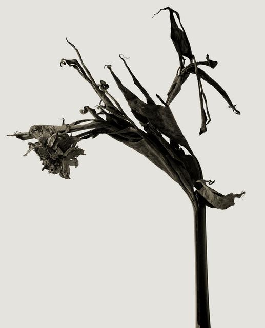, 'Rasputina Eclectica,' 1984, Galleria del Cembalo