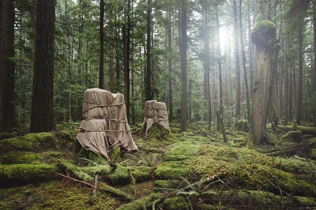 David Ellingsen, 'Installation 6: Untitled (2 Stumps) ', 2014, Winchester Galleries