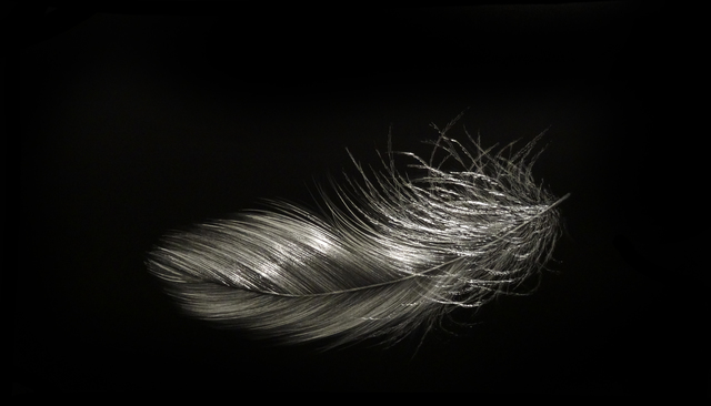 , 'Feather IV,' 2015, Callan Contemporary