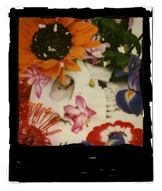Marc Quinn, 'untitled ', 2009, Photography, Polaroid and oil paint, Grob Gallery