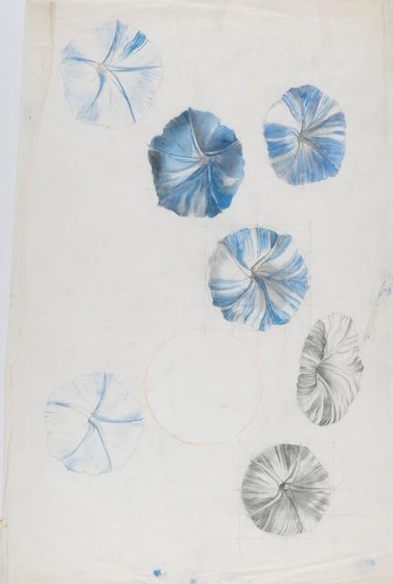 Marion Elizabeth Adnams, 'Study of nasturtium', 1930, Liss Llewellyn