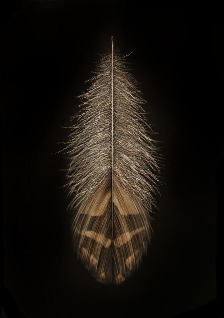 , 'Grouse Feather II,' , Callan Contemporary