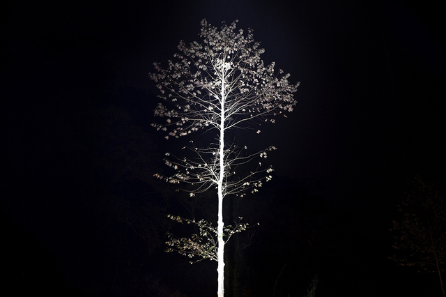 , 'Iluikak: Árbol blanco,' 2016, Almanaque