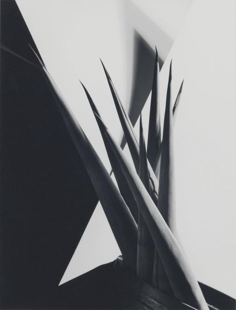 , 'Agave Design I,' 1920s, Edwynn Houk Gallery