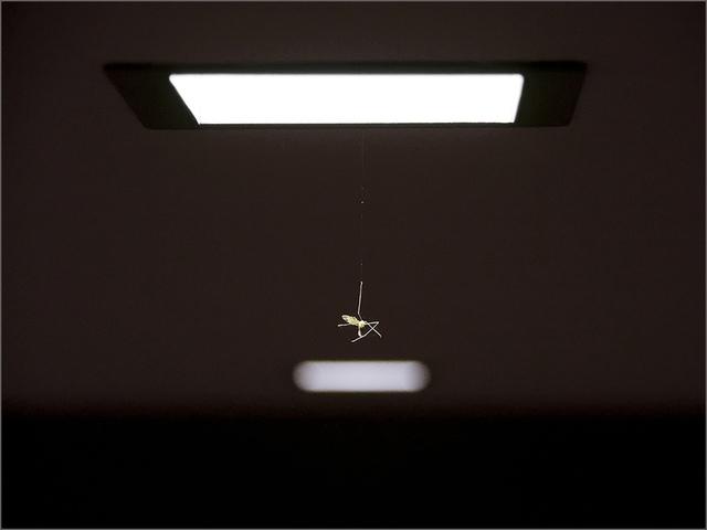 , 'Poem #24,' 2009, Luisa Catucci Gallery
