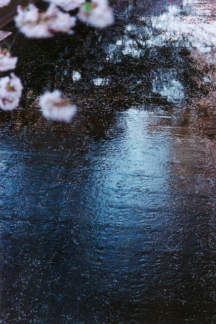 , 'PLANT A TREE,' 2011, Tomio Koyama Gallery