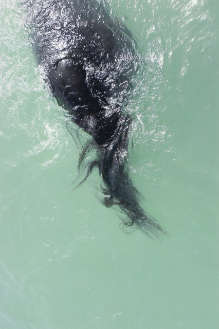 , '#40 Untitled (Swimming) from HORSE 2007-2014,' 2012, Mai 36 Galerie
